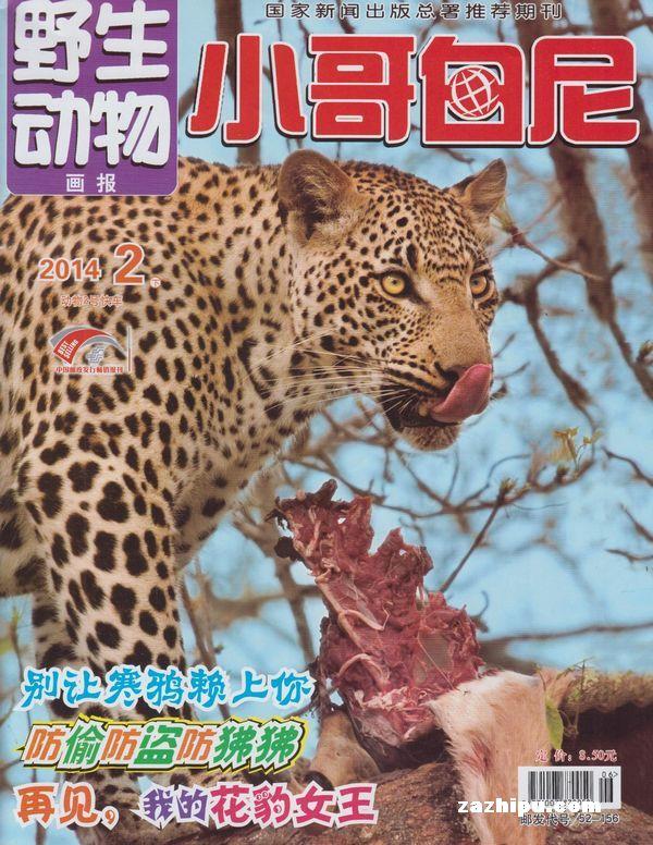 小哥白尼野生动物画报2014年2月期-杂志封面秀