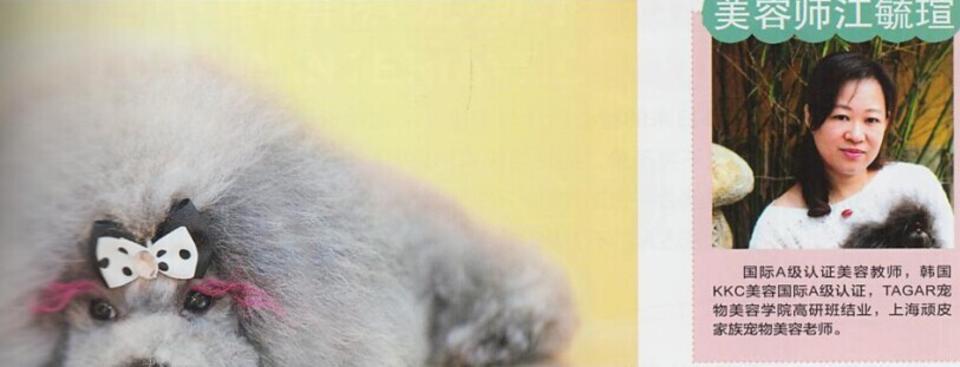 国际A级认证美容教师,韩国KKC美容国际A级认证,TAGARKKC美容学院高研班结业,上海顽皮家族宠物美容老师。