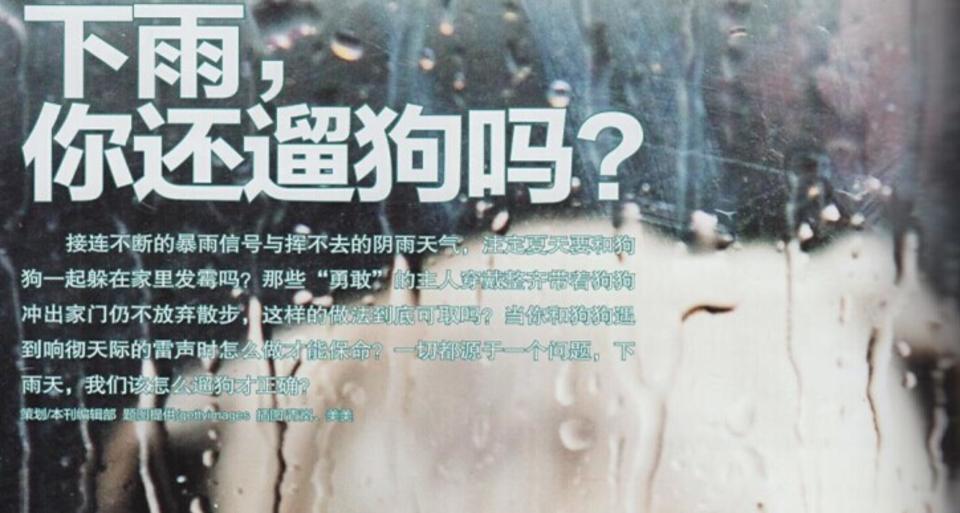 下雨,你还遛狗吗?