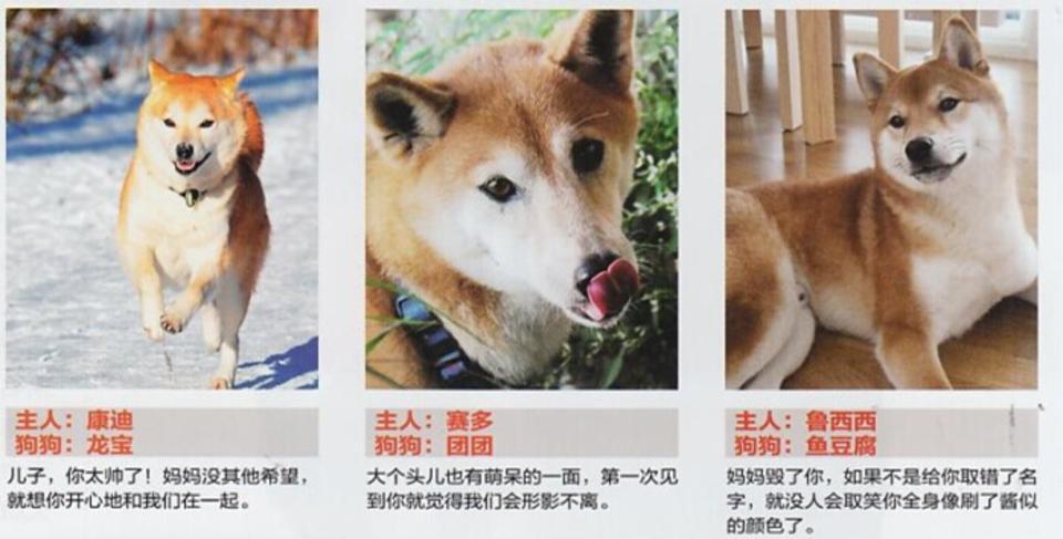 主人:康迪;狗狗:龙宝;儿子你太帅了!妈妈没其他希望,就想你开心地和我们在一起。