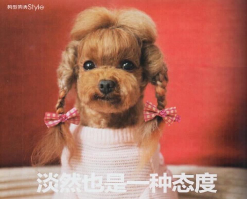 狗型狗秀,STYLE;淡然也是一种态度