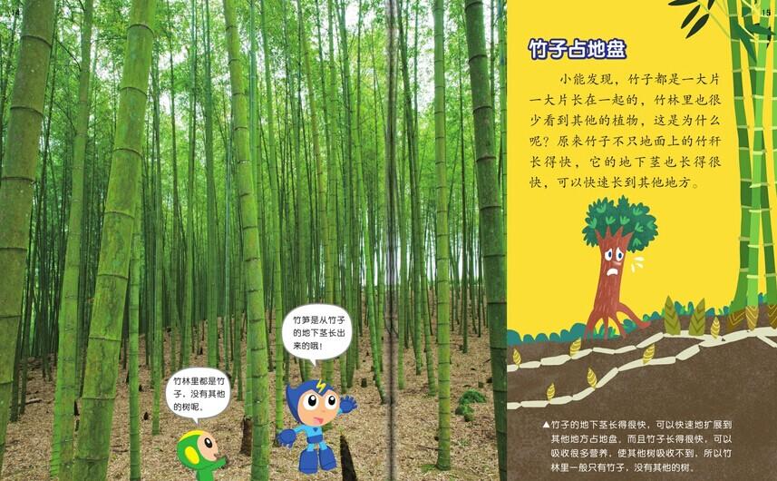 竹子占地盘