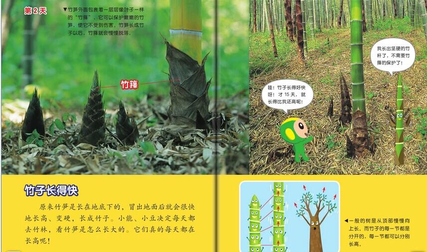 竹子长得快
