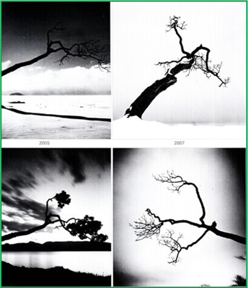 聚焦 聚焦的方法 艺术写真 如何手动聚焦 自动聚焦的不同模式的使用 对焦区域的选择