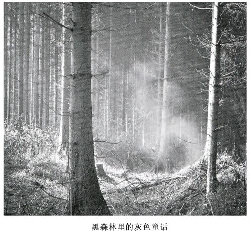 黑森林里的灰色童话
