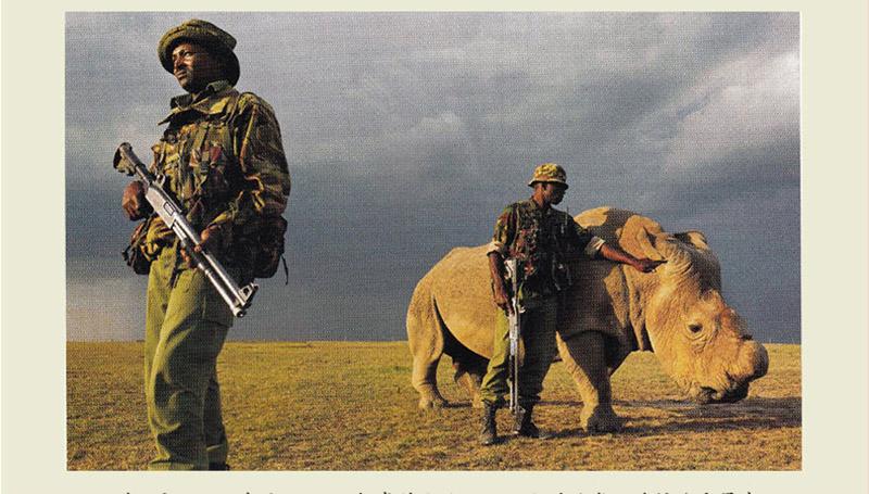 2015年4月15日,肯尼亚,4人组成的小队一天24小时站岗,确保北方犀牛SUDAN的安全,它是世界最后一头雄性北方白犀牛。