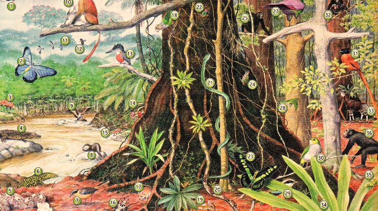丛林动植物大全图片
