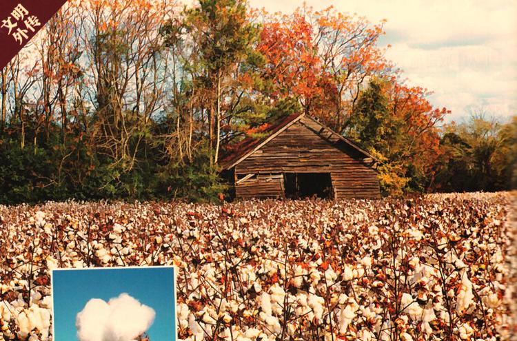 棉花就是大王