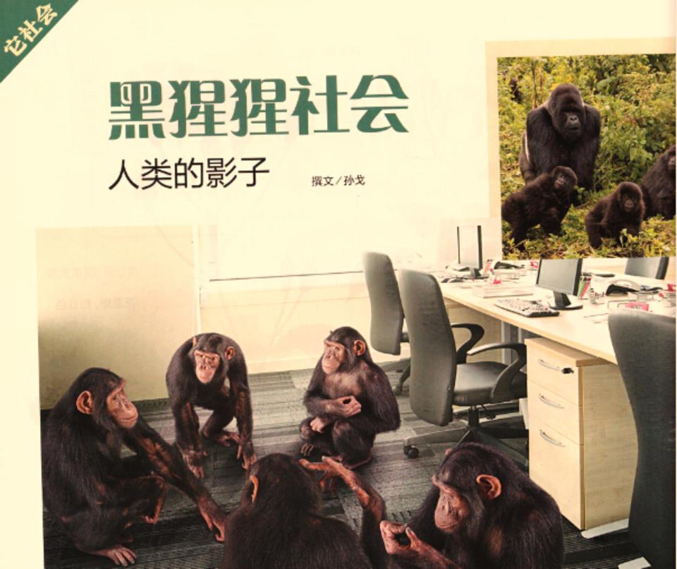 黑猩猩社会 人类的影子