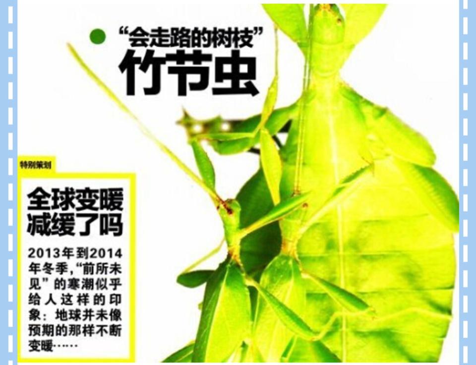 竹节虫 全球变暖