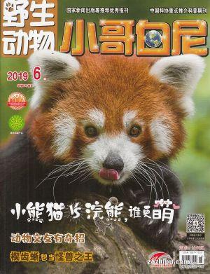 野生动物(小哥白尼)2019年6月期