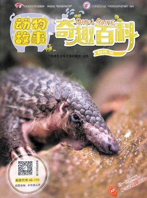 奇趣百科动物故事2019年10月期