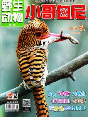 小哥白尼野生动物画报2015杂志订阅-杂志铺:杂志折扣