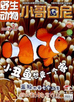 小哥白尼野生动物画报(1年共12期)(杂志订阅)