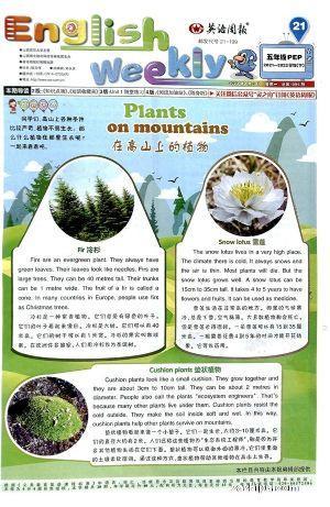英语周报五年级PEP版(1年共40期)(杂志订阅)