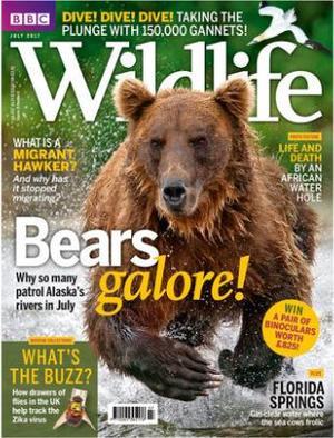 BBC野外生活BBC Wildlife(英文)(1年共12期)(雜志訂閱)