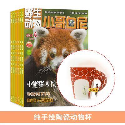 小哥白尼野生动物画报(1年共12期)+送纯手绘陶瓷动物杯