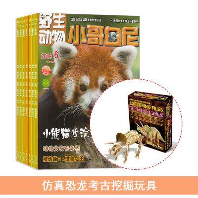 小哥白尼野生动物画报(1年共12期)+送仿真恐龙考古挖掘玩具