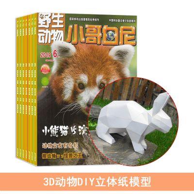 小哥白尼野生动物画报(1年共12期)+送3D动物DIY立体纸模型